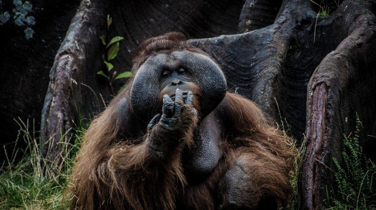 Sumatra - zwierzęta i rośliny